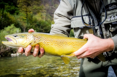 Flyfishing Slovenia - Idrijca and Soca rivers